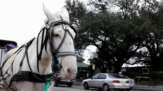 Carriage Horse Next to Street