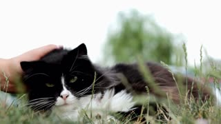 Cat enjoying being pet in grass