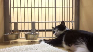 Cat in cage up for adoption at pet store.