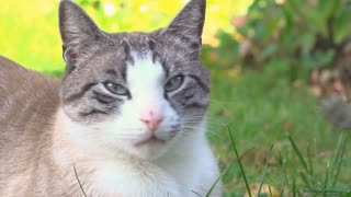 Cat in grass enjoing being pet by human hand 4k
