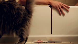 Cat looking at person in tub bleeding 720p