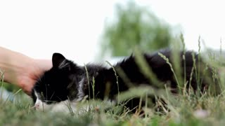 Cat rolling around in grass being pet