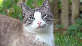 Cat sitting in grass relaxing close up on face 4k