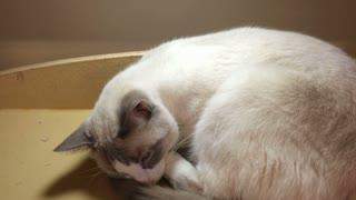 Cat sleeping on shelf