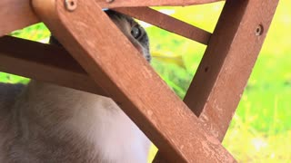 Cat under chair being playful with human hand 4k