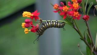 Caterpillar Eating Flower