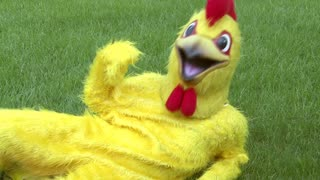 Chicken laying in grass Waving