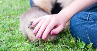 Child petting puppy chow chow in grass 4k