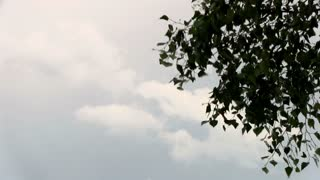 Clouds in background of tree