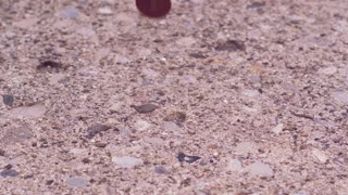 Coins landing on ground slow motion