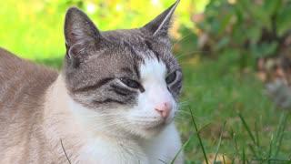 Cute cat relaxing in backyard grass 4k
