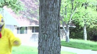 Dancing Chicken Behind Tree