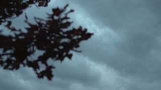 Dark sky with tree branches out of focus