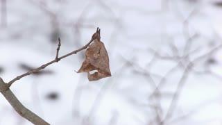 Dead fall leaf in winter