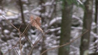 Dead leaf blowing in wind on tree