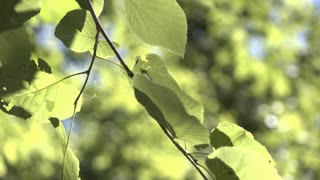 Detail view of leaves in nature on sunny day 4k