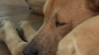 Dog laying on ground with eyes wide open 4k