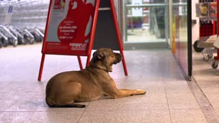 Dog waiting for owner outside of grocery store