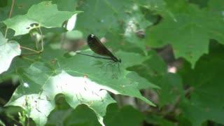 Dragon Fly on leaf