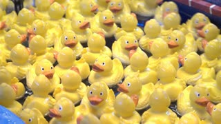 Duck catching carnival game 4k