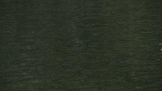Ducks crossing screen