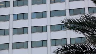 Exterior of office building with palm tree blowing in foreground 4k