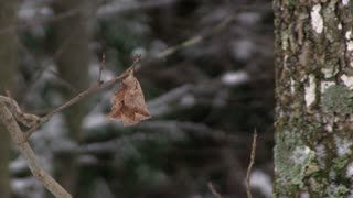 Fall leaf on tree with winter forest background