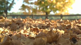 Fall leaves covering forest floor in sunshine 4k