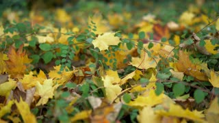 Fall leaves on forest floor pan shot 4k