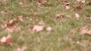 Fall leaves on ground in grass rack focus