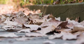 Fallen leaves laying on wooden deck 4k