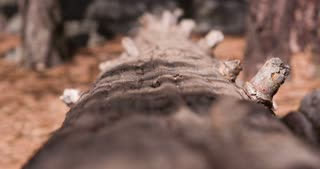 Fallen tree on forest floor shallow depth of field 4k.