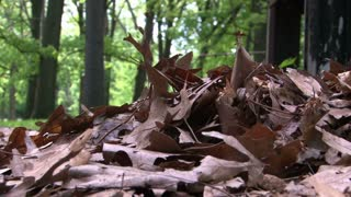 Feet Kicking through Brown Leaves