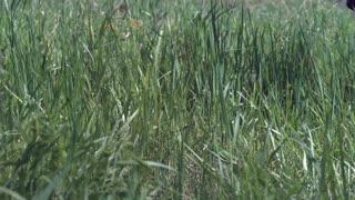 Feet of person running through tall grass slow motion
