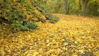 Female walking up forest hill path covered in fall leaves 4k