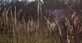 Field in sunshine 4k