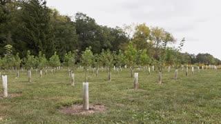 Field of young trees on nursery farm 4k