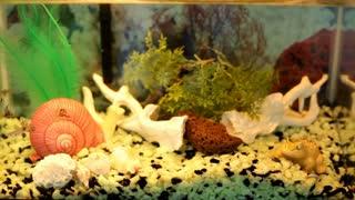 Fish swimming in aquarium tank