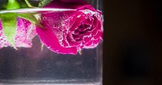 Floating pink rose in sparkling water 4k