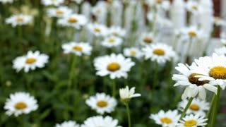 Flowers in Garden Dolly Shot