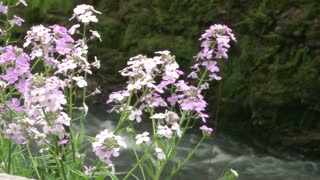 Flowers with Stream in the Background
