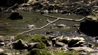 Flowing water through shallow creek forest floor 4k