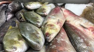Fresh fish at market sitting on ice 4k