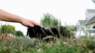 Friendly neighborhood cat pet in gass