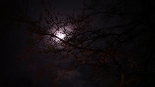 Full Moon behind tree