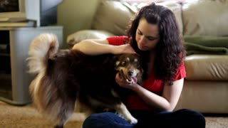 Girl petting Happy Dog in living room