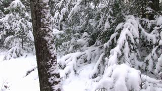Girl walking down winter path pan