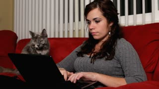 Girl working at computer with gray cat