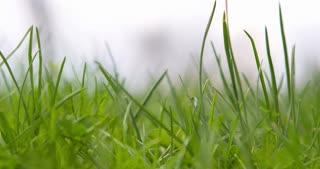 Grass close up 4k.