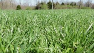 Grass pan shot low angle